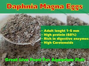 DAPHNIA-MAGNA-EGGS-WATER-FLEA-GREAT-LIVE-FOOD-FOR-AQUARIUM-FISH-BETTA-GUPPY