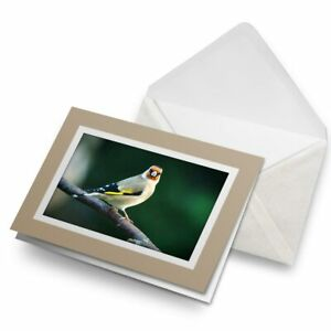 Greetings-Card-Biege-Goldfinch-Bird-Small-Gold-Finch-16219