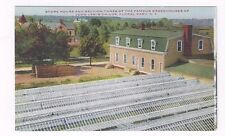 NY Floral Park New York antique db post card View Childs' Greenhouses