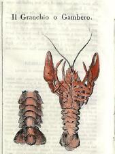 Stampa antica GRANCHIO GAMBERO CRAB Cosmorama 1840 Old antique print