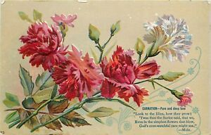 Details About C1910 Embossed Postcard 25 Language Of Flowers Carnation Pure Deep Love