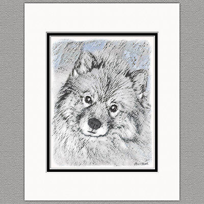 Keeshond Playtime Original Art Print 8x10 Matted to 11x14