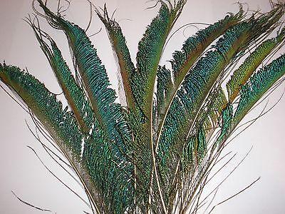 "15 Pcs PEACOCK SWORDS Natural Feathers 10-14/"" Craft//Pad//Costume//Halloween//Bridal"