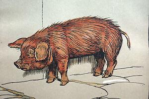 Cecil Aldin Imprimir 1912 Baby Pig Outcast Animais Da Fazenda