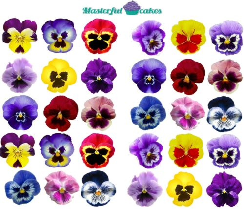 30 X PANSY FLOWERS EDIBLE RICE,WAFER ICING /& PRECUT WAFER TOPPERS