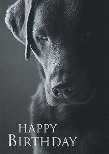 Image Is Loading Black Amp White Birthday Card Labrador Dog