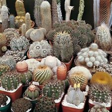 Cactus mix 20 seeds ( Approximate ) *Easy grow * Care free * CombSH C21