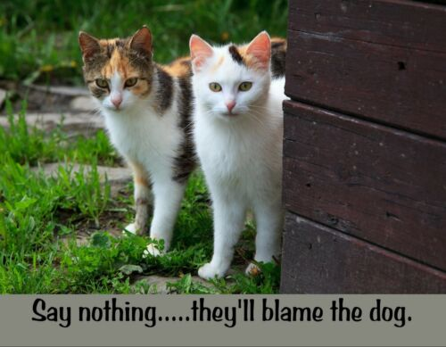 METAL REFRIGERATOR MAGNET Two Cats Say Nothing They/'ll Blame The Dog Cat Humor