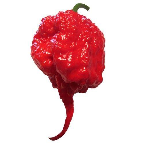Carolina Reaper HP22BNH7 Red Hot Chili Pepper Seeds 25 PCS WORLD/'S HOTTEST!