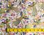 Japanese Oriental Peacock Plum Blossom Fabric Craft Cotton Fat Quarter FQ #0003