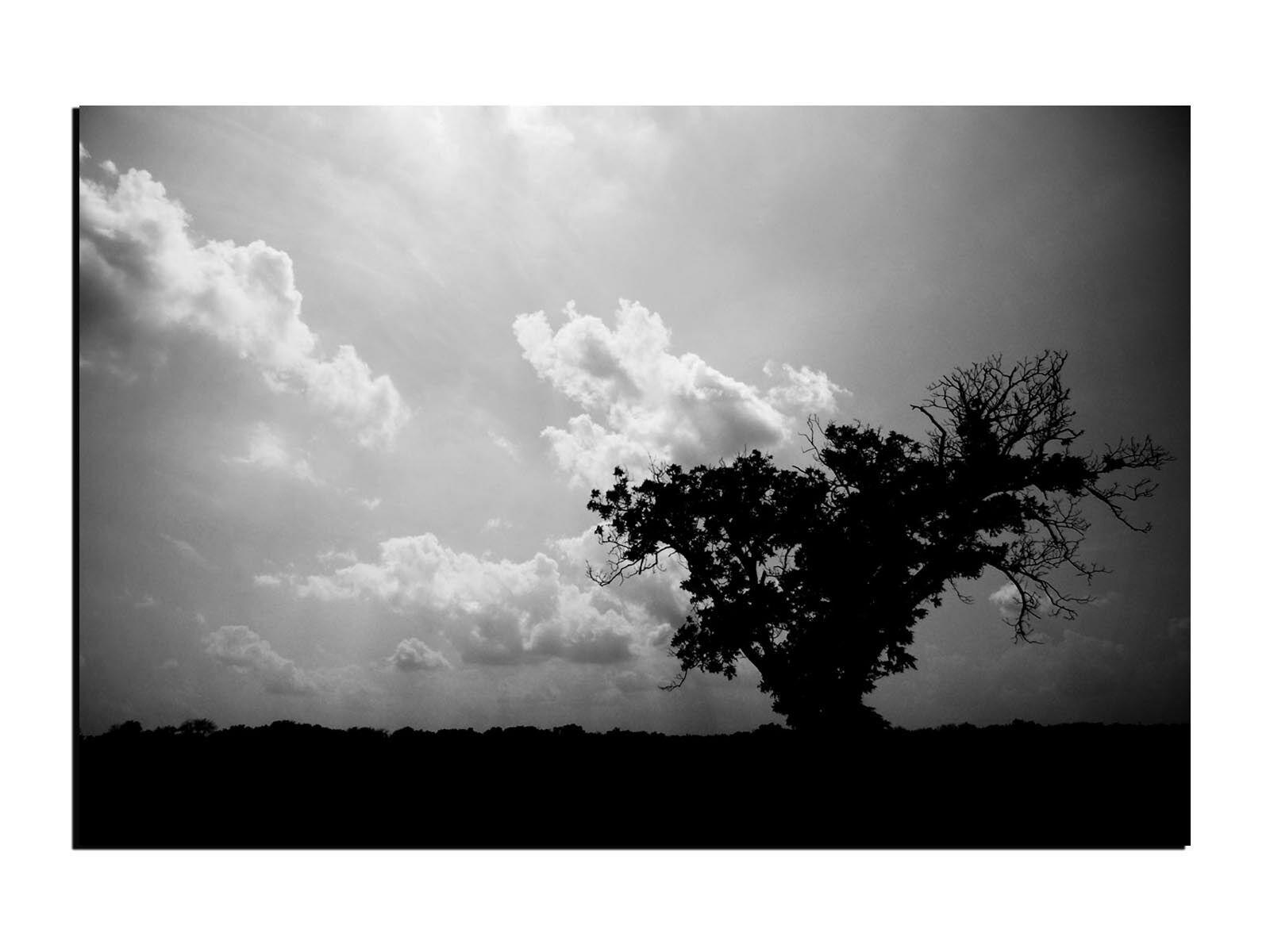 Alu-Dibond Wandbild Silhouette eines Baums bei Dämmerung AB-704 Butlerfinish®