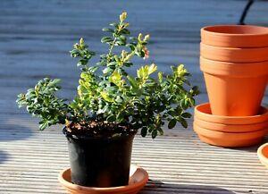 Carrelage Autocollant Fliesenbild Mango Orange Pomme fruits fruits Autocollant fp3p13h