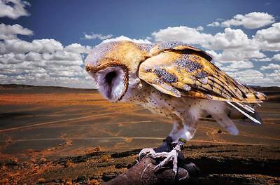 OwlyBoy Bric a Brac
