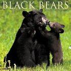 Black Bears 2017 Wall Calendar by Willow Creek Press
