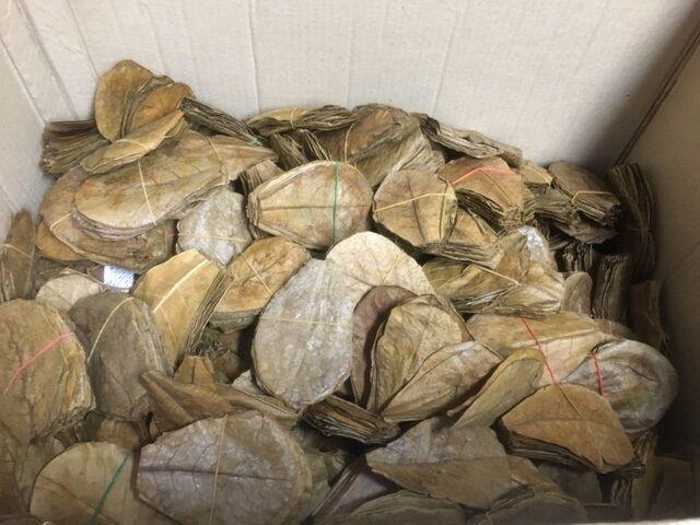 NANO feuilles d'amandes de mer 10cm catappa  meilleure meilleure meilleure qualité  101000 pièce 7088b4