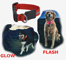 Nite Ize PetLit LED Collar Red Fire Hydrant Stylish Safety w//Carabiner 2-Pack