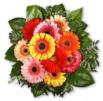 """Garten & Terrasse Blumenstrauß Blumenversand """"alles Gerbera"""" Blumensträuße grußkarte+wunschtermin+frischhalter Zu Verkaufen"""