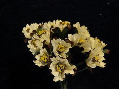 """Capace Vintage Modisteria Fiore Bianco Bambola Taglia 1 """" Lotto 12pc Per Cappello Bello E Affascinante"""