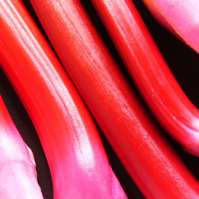 RHUBARB - VICTORIA - multiples of 1,000 seeds custom packed to order