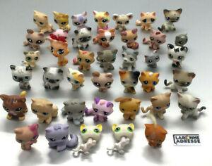 LPS-LITTELEST-PET-SHOP-CHAT-CAT-40-EX-AU-CHOIX-CHOOSE-PETSHOP-LITTLE-PET-SHOP