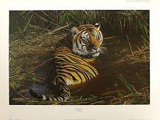 """Anthony GIBBS """"uno dei pochi"""" TIGER firmata LIMITED ED! dimensioni: 57cm x 78cm NUOVO"""