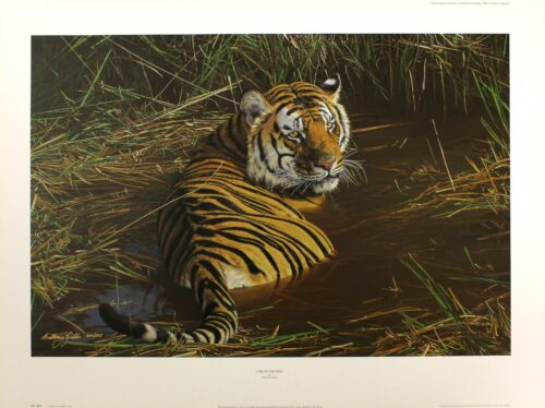 Ed The Tamaño Limited Nuevo x Anthony one Few 57cm Of Signed Gibbs Tiger 78cm w6On60WSz