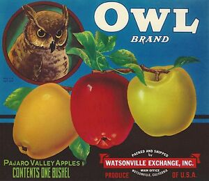 (3) RARE OLD ORIGINAL 1920-1940 GORGEOUS OWLS FRUIT CRATE LABEL ART COLLECTION