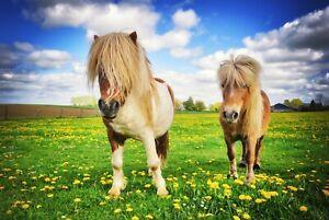 A1-Shetland-Ponies-Poster-Art-Print-60-x-90cm-180gsm-Horse-Pony-Fun-Gift-8518