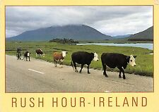 BF38548 rush hour ireland types   cow vache animal animaux