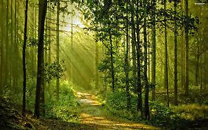 Fairy-Realms-Reiki-Attunement-healing-planet-environment-pdf-manual-on-cd-bonus