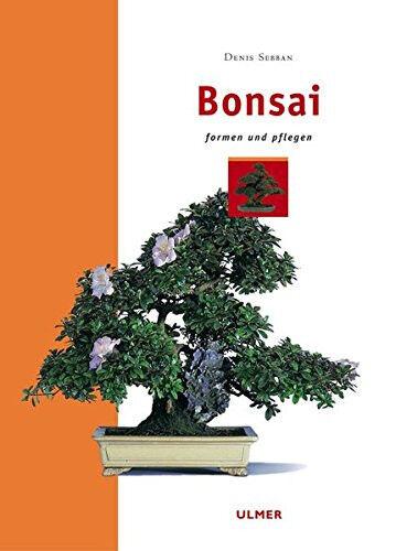 circa 35 cm Ligustrum Principiante-Set ligustro circa 9 J. BONSAI set regalo