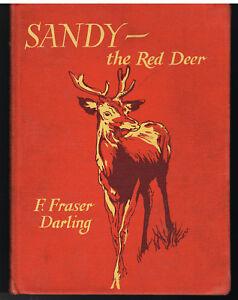 Sandy-The-Red-Deer-by-F-Fraser-Darling-1949-1st-Ed-Vintage-Book