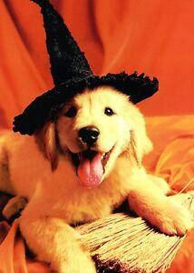 Golden Retriever Negro Sombrero Halloween Tarjeta Perro Tarjeta De