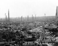 8x10 World War I Photo: No Man's Land - Flander's Field