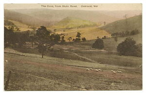 OAKLAND-MD-The-Cove-State-Road-Sheep-Vtg-Hand-Colored