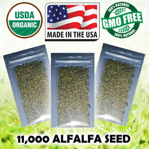 Sprouting-Seeds-Pure-USDA-Organic-ALFALFA-Sprouts-20-Gram-11-000-Seeds-USA