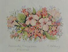 Carole HOLDING BERMUDA - Farb- Lithografie: - FRANGIPANI /HIBISCUS - mit Rahmen
