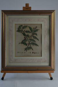 Antique Etching The Holly Tree John Evelyn From The Dorchester Hotel Framed