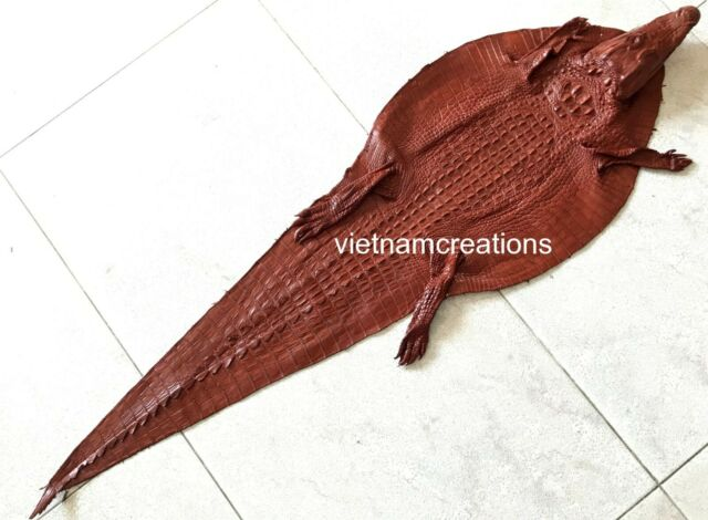 Genuine Crocodile Alligator Skin Leather Hide Exotic Pelt taxidermy Animal Soft.