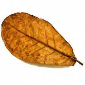 Dried Leaves = Reptiles Almond Catappa -shrimp -bettas Fast Color 30