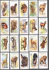 1923 Adkin & Sons Wild Animals of The World Tobacco Cards Complete Set of 50