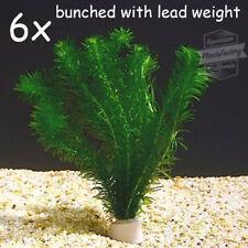 30 live plants anacharis elodea densa egeria aquarium planted tank