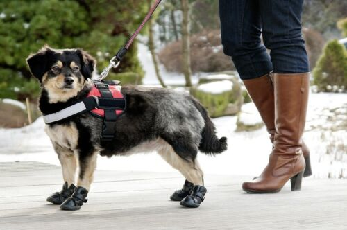 Karlie Xtreme Boots-perros zapatos