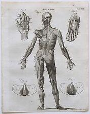 1797 Anatomy Human Body Muscles Myology Genuine Antique Print 1797