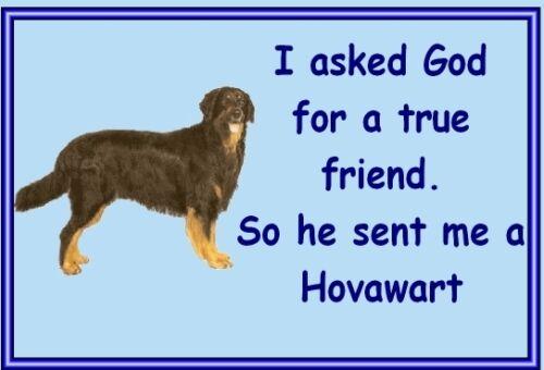 Hovawart Free UK p//p Dog fridge magnets New Gift New