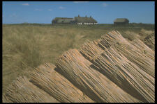 477000 Water Reed For Thatch Roofs Denmark A4 Photo Print (not Straw?!)