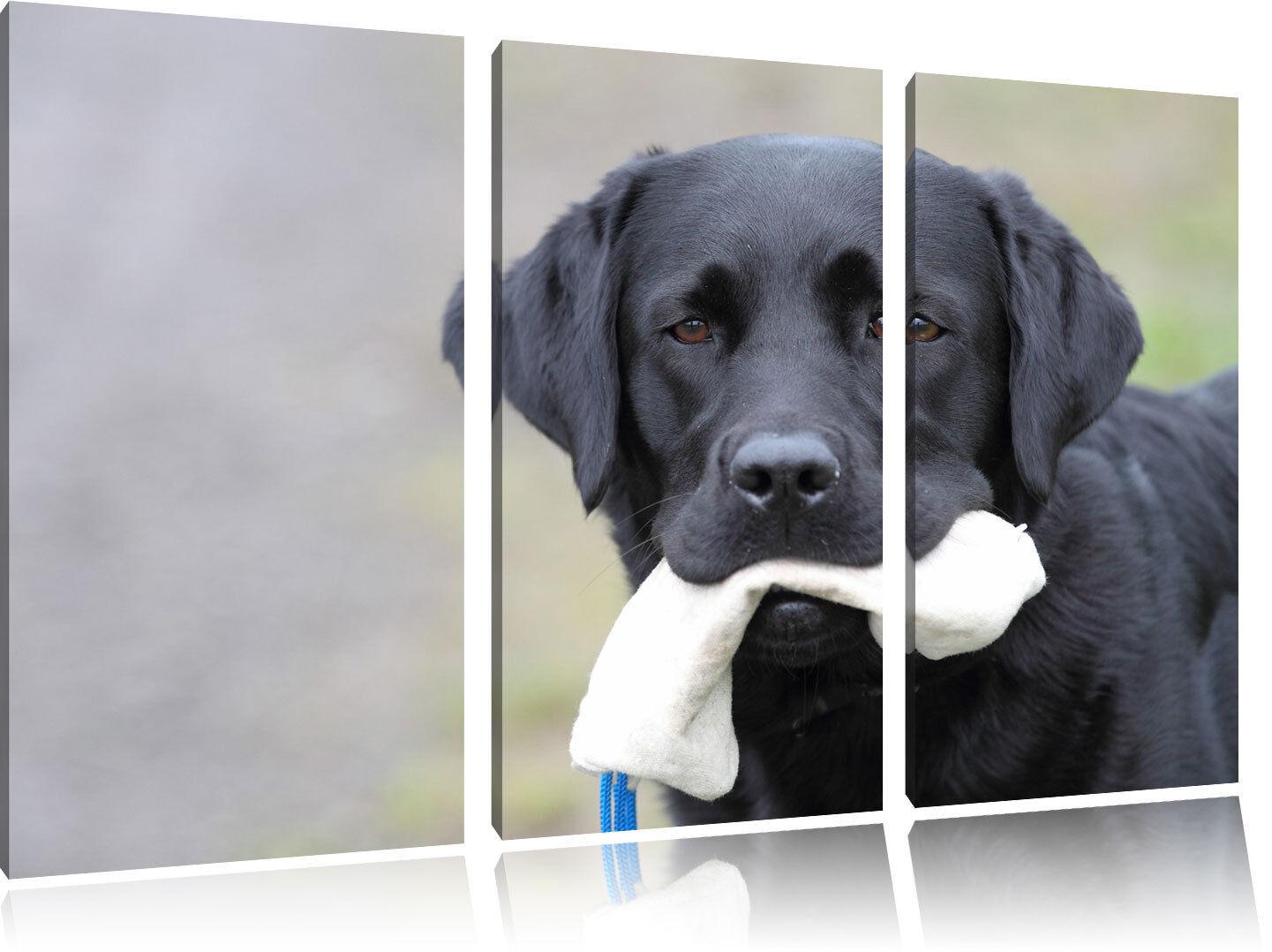 Negra Labrador con Juguetes Juguetes Juguetes 3-Teiler Foto en Lienzo Decoración de Pa rojo  621bea