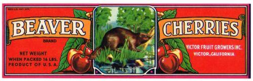 CRATE LABEL VINTAGE OLD VERSION RED BEAVER CHERRY CHERRIES VICTOR 1950S ORIGINAL