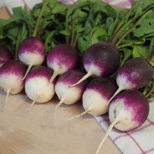 Radish Diana Vegetable Kings Seeds 300 Seeds