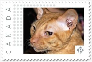 CAT = CORNISH REX breed = postage stamp MNH Canada 2018 [p18-09-25]